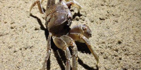 Crab on Sand Free Photo 3